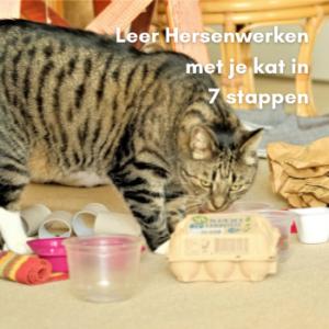 Zeven Stappen Kat