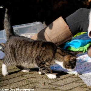 Kat op ontdekking